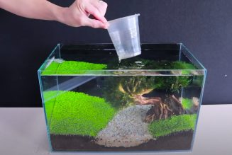 How To Grow Aquatic Plants in Aquarium