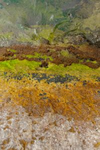 algae and moss on rock