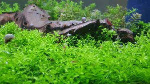 planted tank producing oxygen