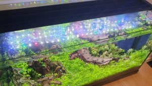 planted shrimp tank aquarien eco