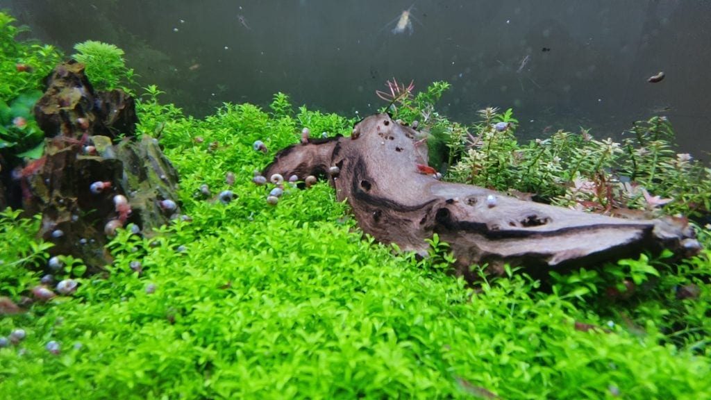 Tropical aquarium plants