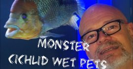 Feeding Monster Cichlids – with Andy Woods