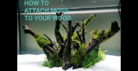 Attaching Moss to Wood – Quick and easy!