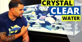Crystal clear aquarium water – top 3 tips from KaveMan Aquatics