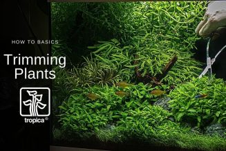 maintaining aquarium plants