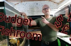 fish room the cheap way andy woods