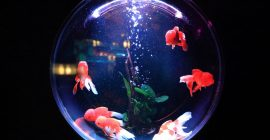 Aquarium Cycling – An easy and complete guide