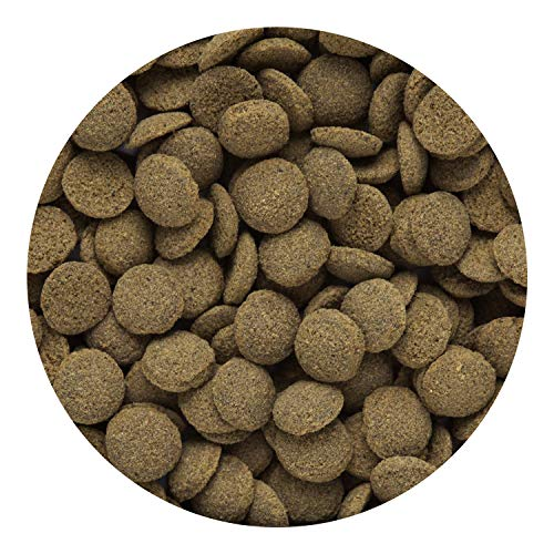 Hikari Tropical Sinking Wafers for Catfish Loaches and Bottom Feeders 388 oz 0 2